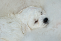 3PL0872-puppy-snuggling-Final-for-web