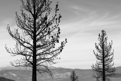Dead-Forest-BW