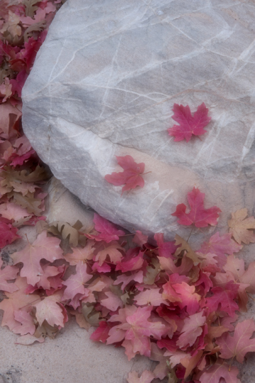 Paul_3PL2765-leaves-on-rock-diffusion-glow-for-web