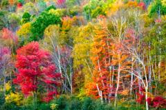 D4P6369-colors-impasto-50-Ilford-01-04-2015-FSS-12x18-brighter-2