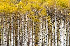 PCL0591-Aspen-Forest-Edit-copy