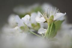 3PL9752-flowers-boca