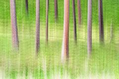 D4P2920-trees-multiple-tc-FSS-12x18m-CLARIFY-FINAL