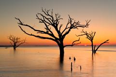 D4P1158-Edisto-Beach-3-trees-with-sun-ilford-01-04-2015-FSS-12x18
