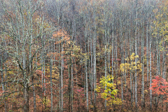 Untitled_Panorama1-old-wood-crop-tc250