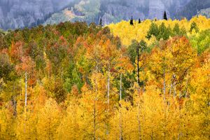 Fall Colors, San Juan Mountains, Colorado