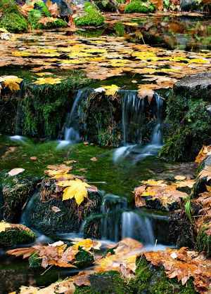 Fall Leaves, Fern Springs, Yosemite California