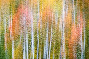 Fall Colors, abstract, Colorado