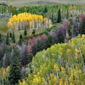 San Juan Mountains, Fall Colors
